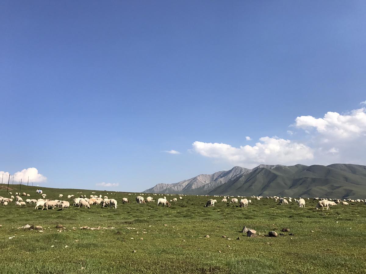 7月30号西宁出发塔尔寺- 日月山证明好的风景在路上 收费景点以后不去了