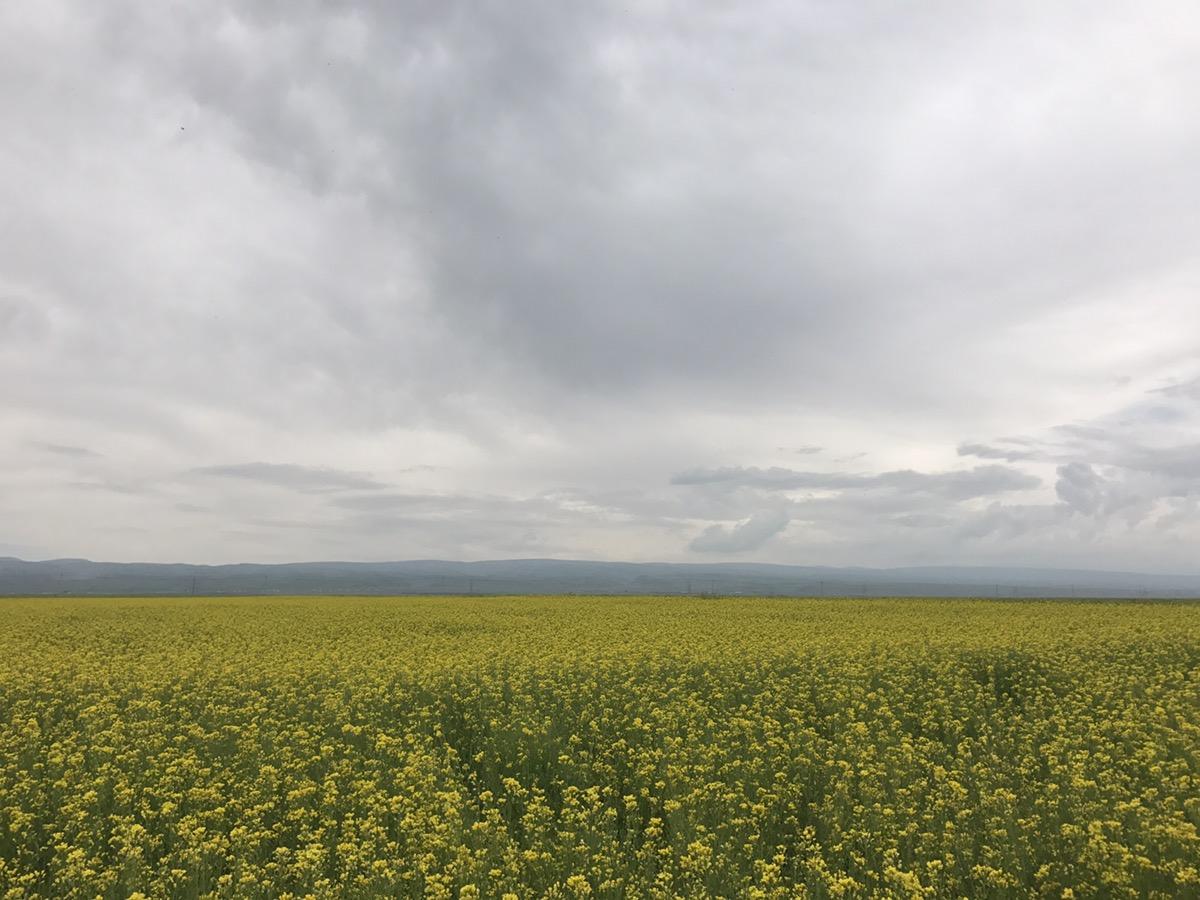 7月31号 青藏高原第一镇 倒淌河镇  青海湖环湖至刚察县  远离了青藏线上的喧嚣的车流